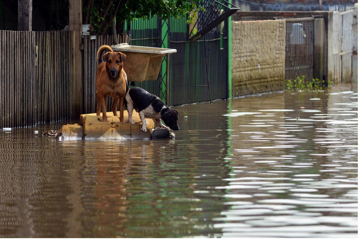 two dogs floating on a make-shift raft during flooding